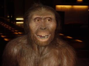 Hominid A: Au. africanus