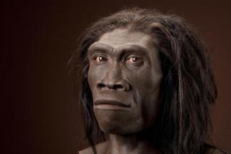 Hominid B: H. erectus